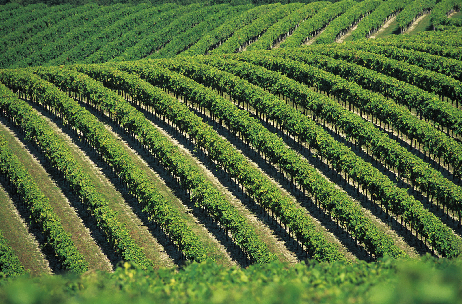 Vignes-roudeyinternational